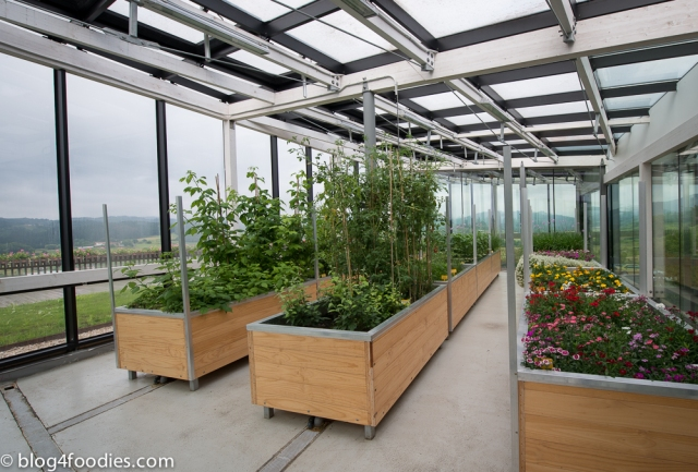 Greenhouse on top of the restaurant